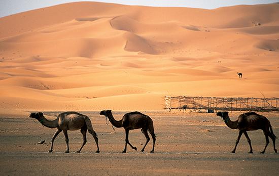 ali_camel_0.1